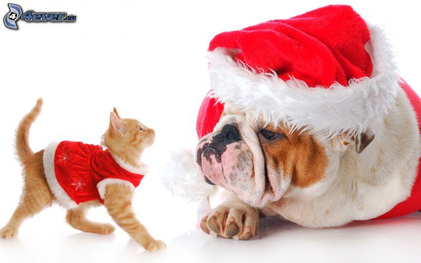 cane e gatto, cappello di babbo natale