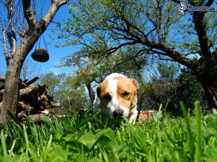 cane in erba, alberi