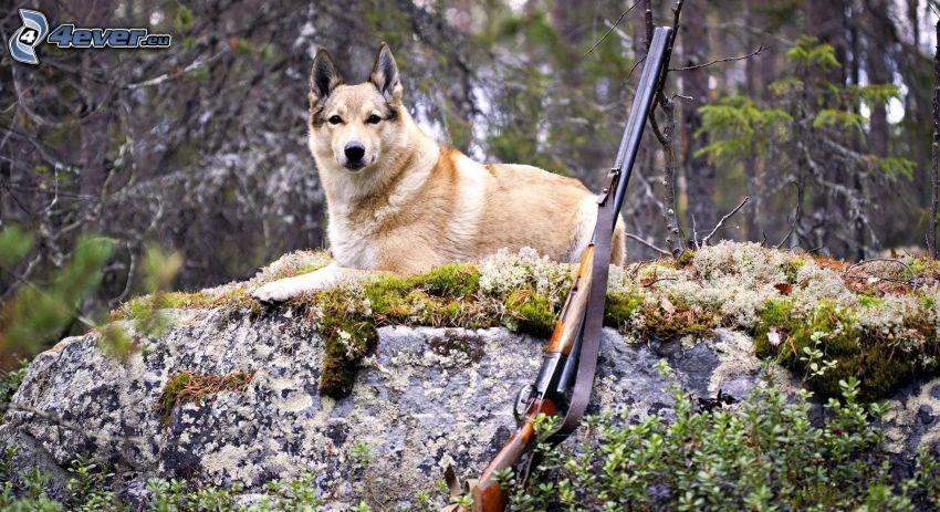 cane marrone, fucile, roccia