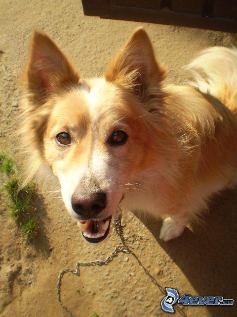 cane sul cortile, cortile, catena