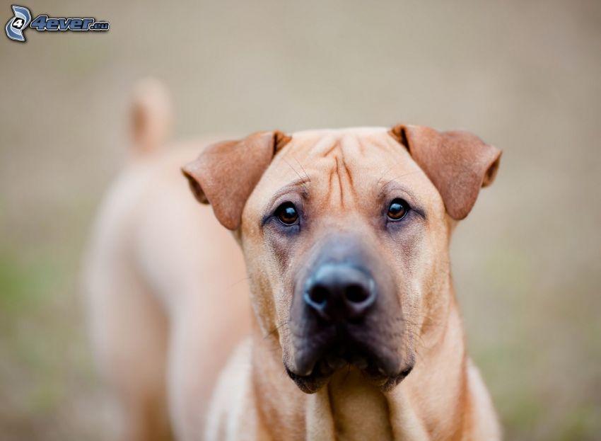 cane sul cortile