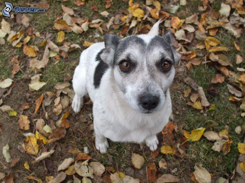 cane sul prato, foglie di autunno