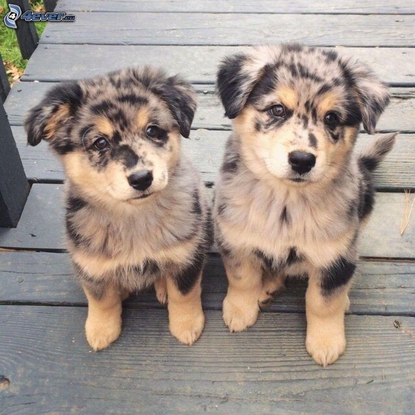 cuccioli, cane sul cortile