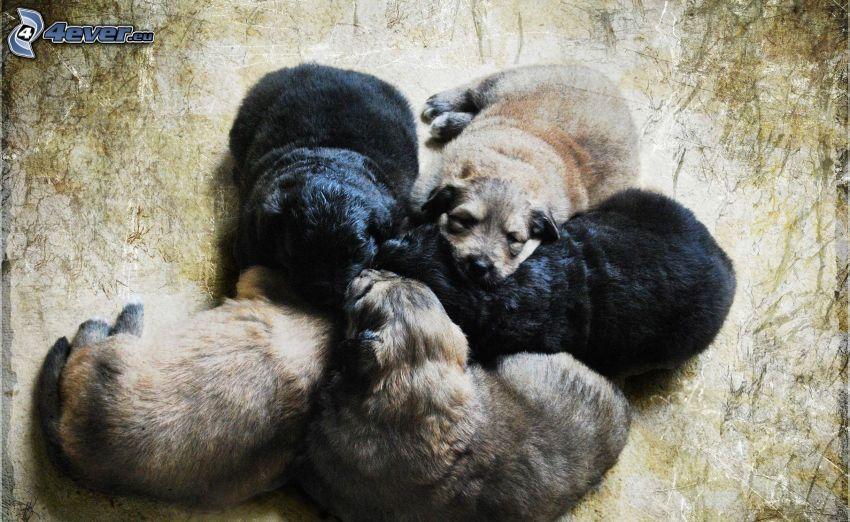 cuccioli addormentati