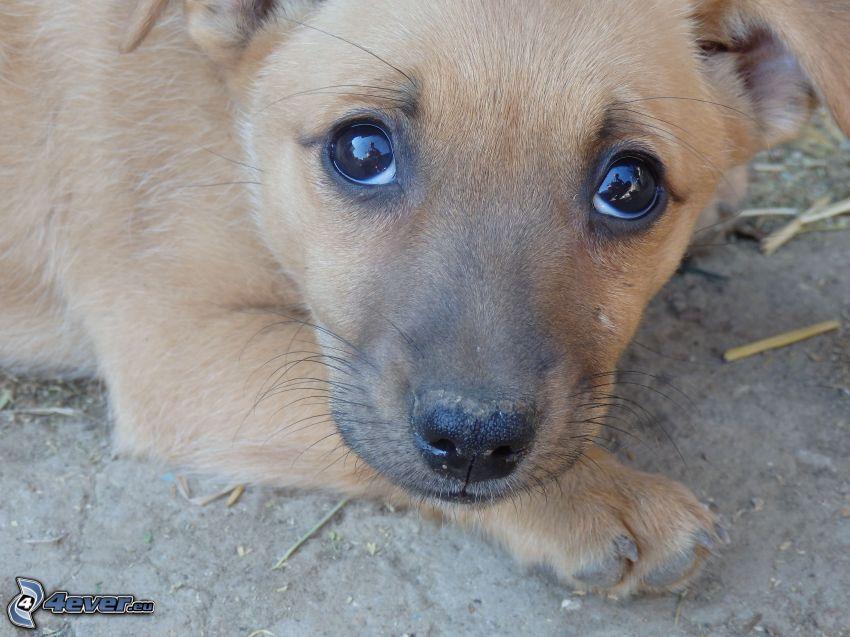 cucciolo, cane sul cortile