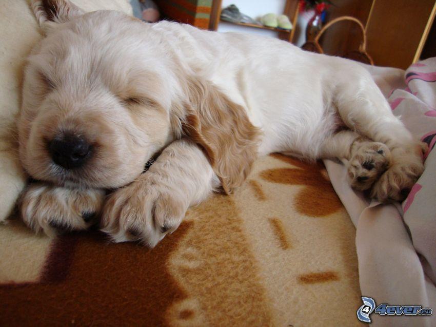 cucciolo addormentato, cane sul letto, coperta