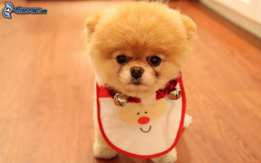 cucciolo marrone