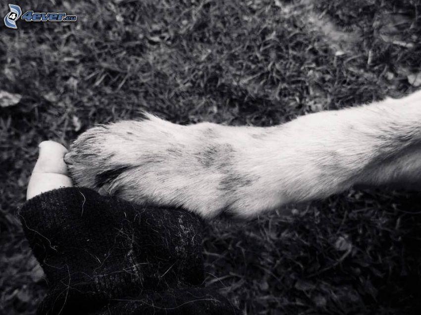 zampa, mano, amicizia, foto in bianco e nero
