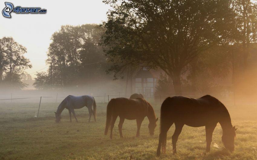 cavalli, nebbia a pochi centimetri dal terreno, alberi