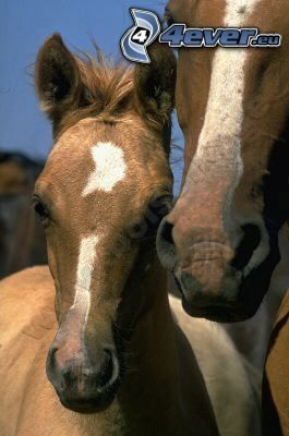cavalli, animali, natura, libertà