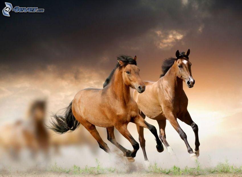 cavalli, correre, polvere, nuvole