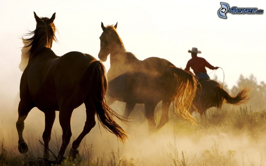 cavalli, cowboy