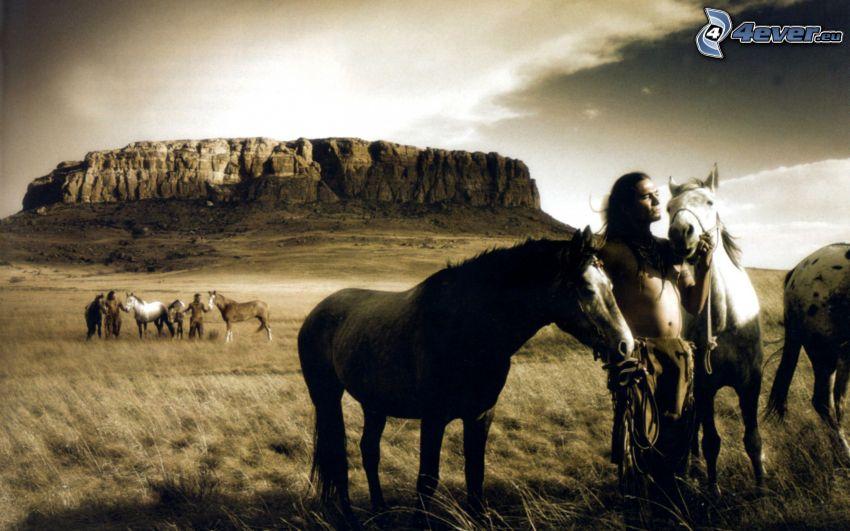 cavalli, indian, roccia