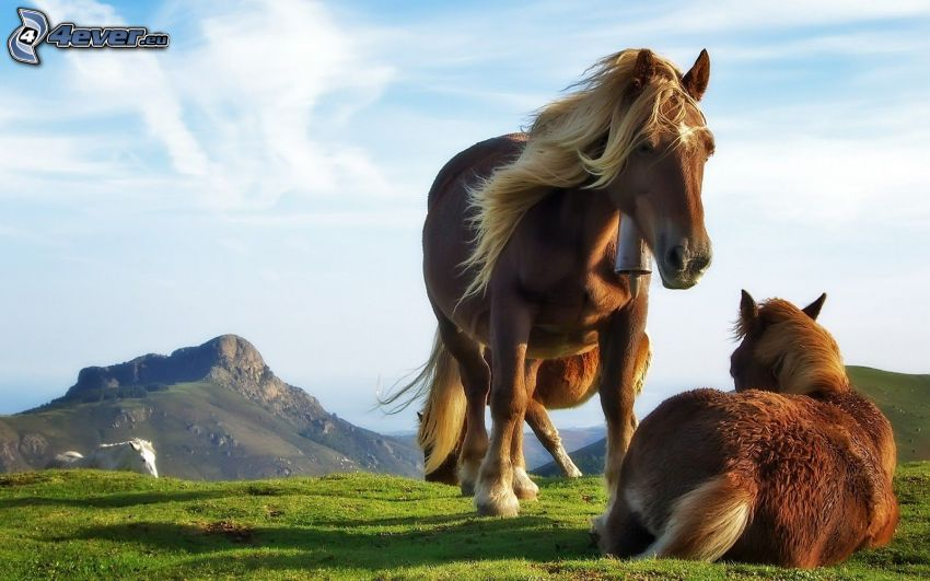 cavalli, montagna