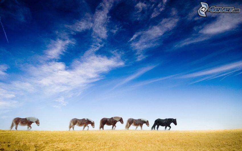 cavalli, nuvole