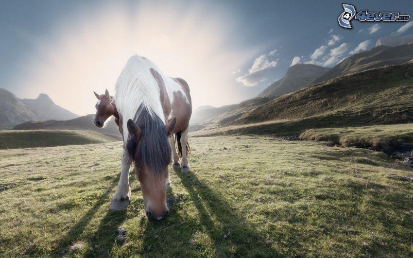 cavalli, pascolo, tramonto in montagna