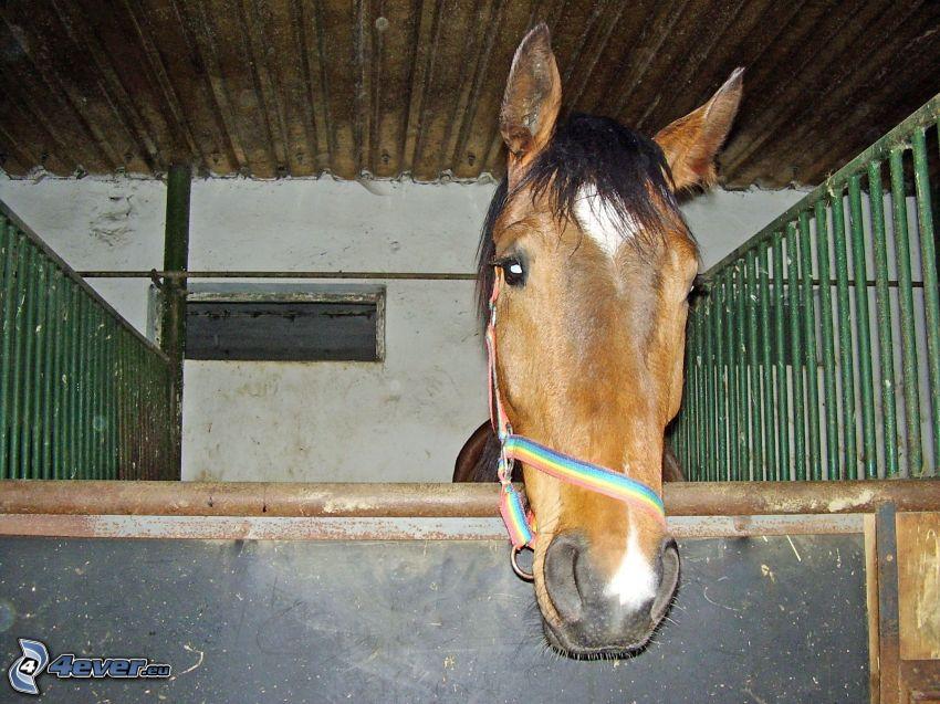 cavallo, scuderia