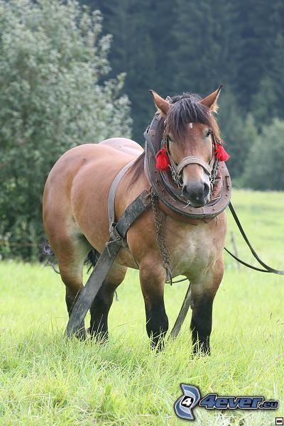 cavallo da tiro, aratro, cavallo e carrozza