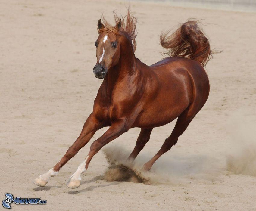 cavallo in corsa, sabbia