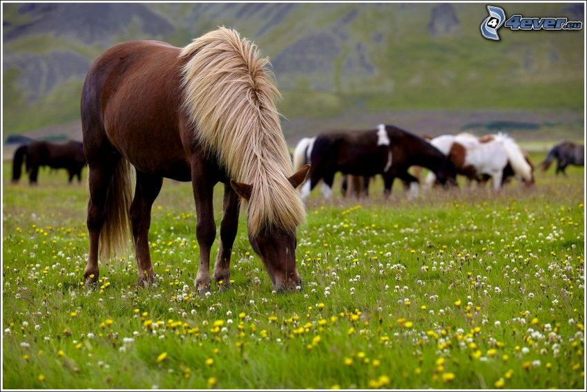 cavallo marrone, cavalli, prato, fiori gialli, fiori bianchi, l'erba