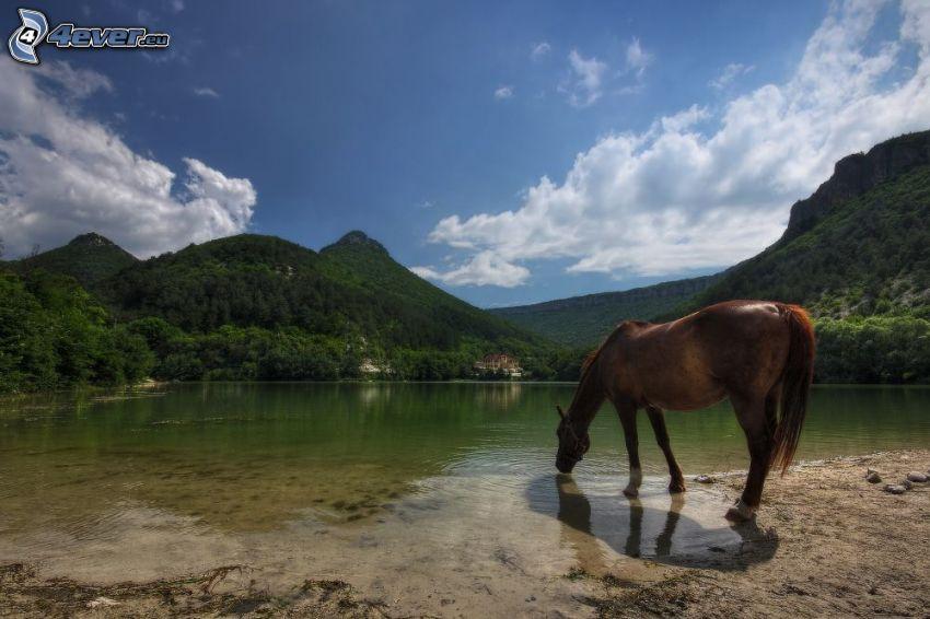 cavallo marrone, lago, montagne