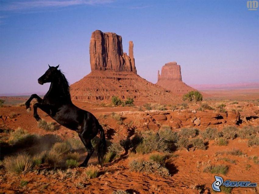 cavallo nero, Monument Valley