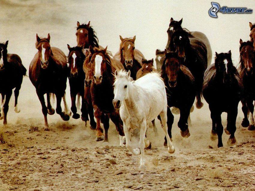 mandria di cavalli, canter, sabbia