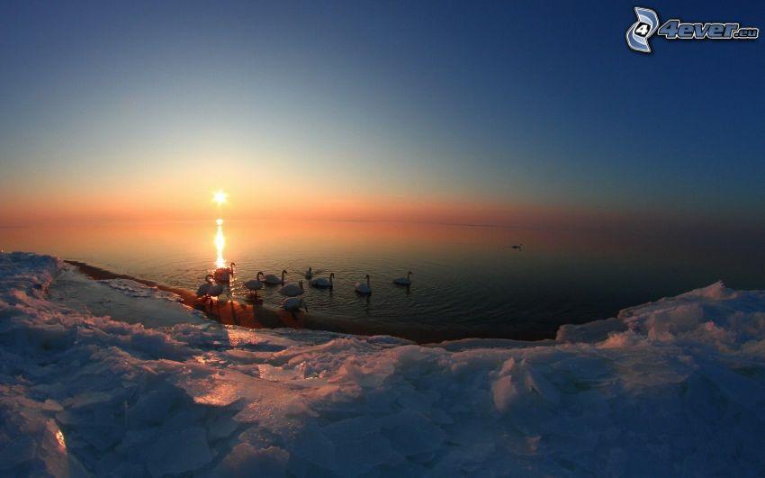 cigni, Tramonto sul mare, ghiaccio