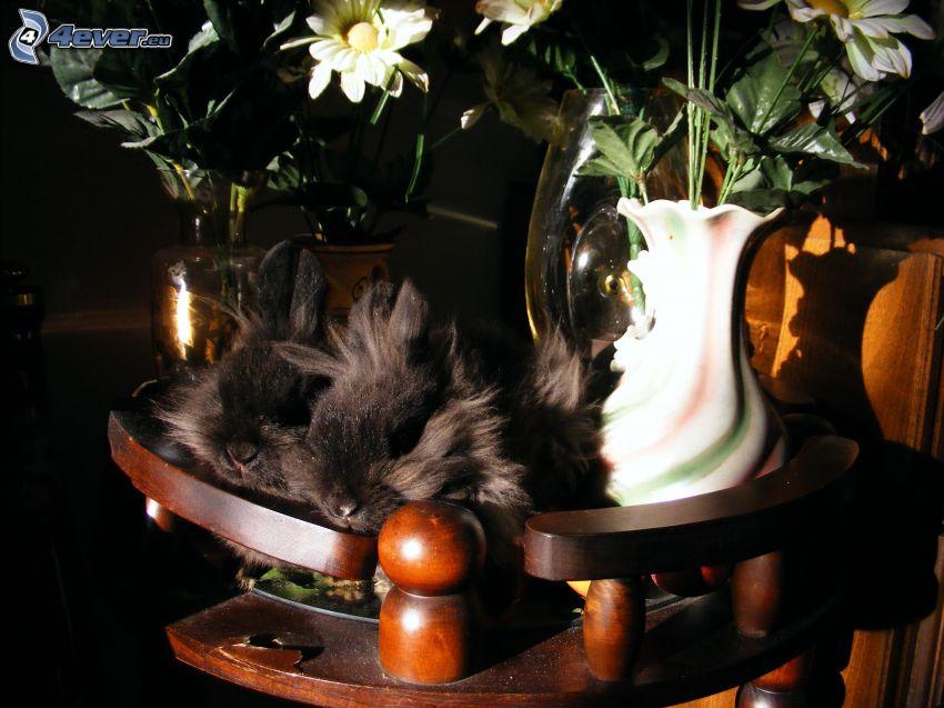 coniglietti, fiori in un vaso