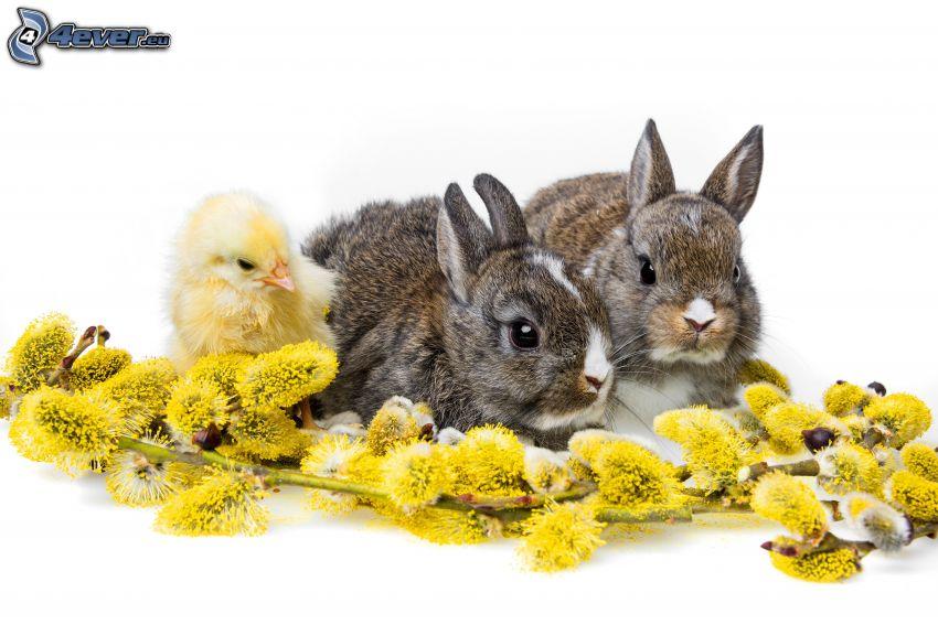 coniglietti, pulcino, ramoscello fiorito