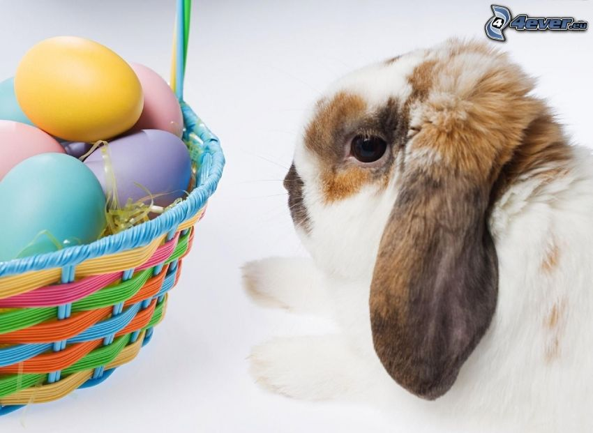 coniglio, uova, cesto
