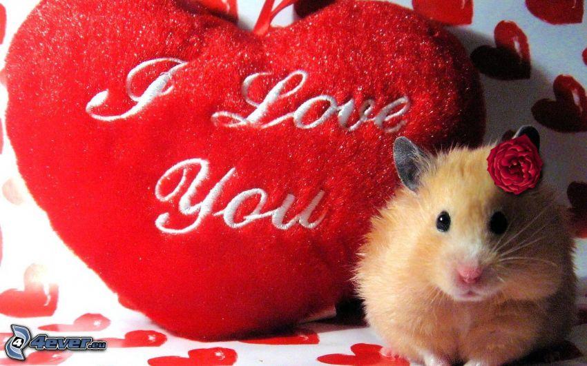 criceto, cuscino cuore, I love you, fiore rosso