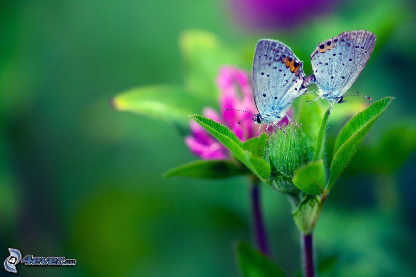 farfalle, foglie verdi, fiore rosa