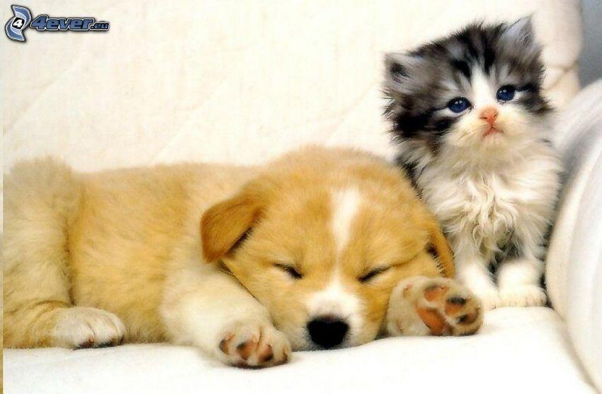 Cucciolo e gattino, amici