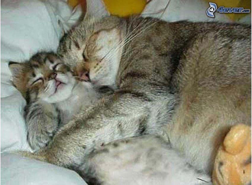 gatta e gattino, gatti addormentati, abbraccio a letto