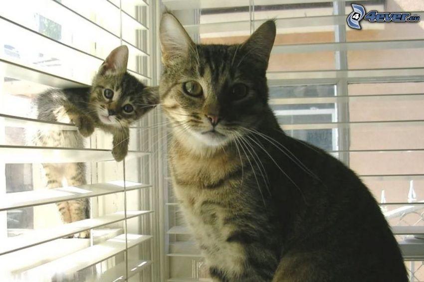 gatta e gattino