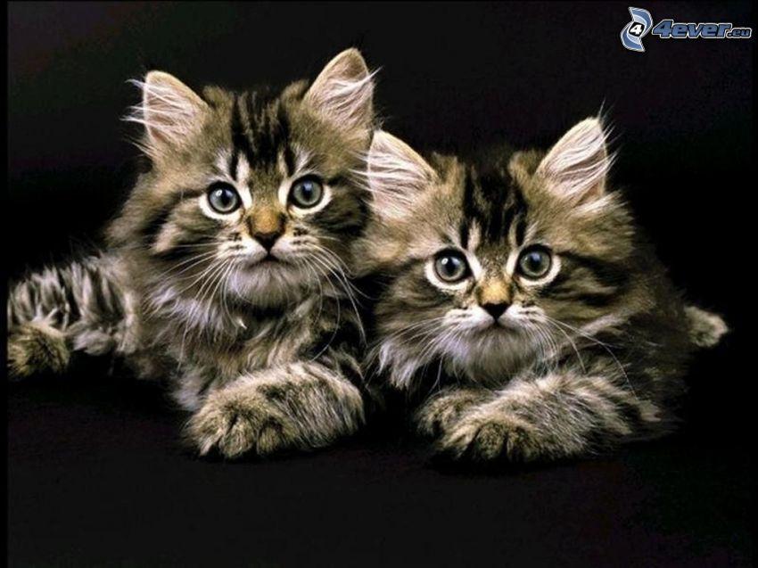 gattini, cuccioli