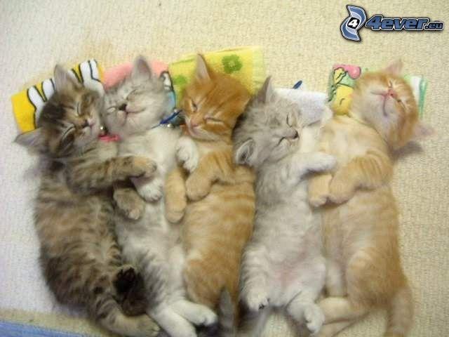 gattini addormentati, riposo