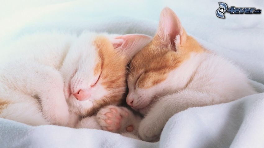 gattini addormentati