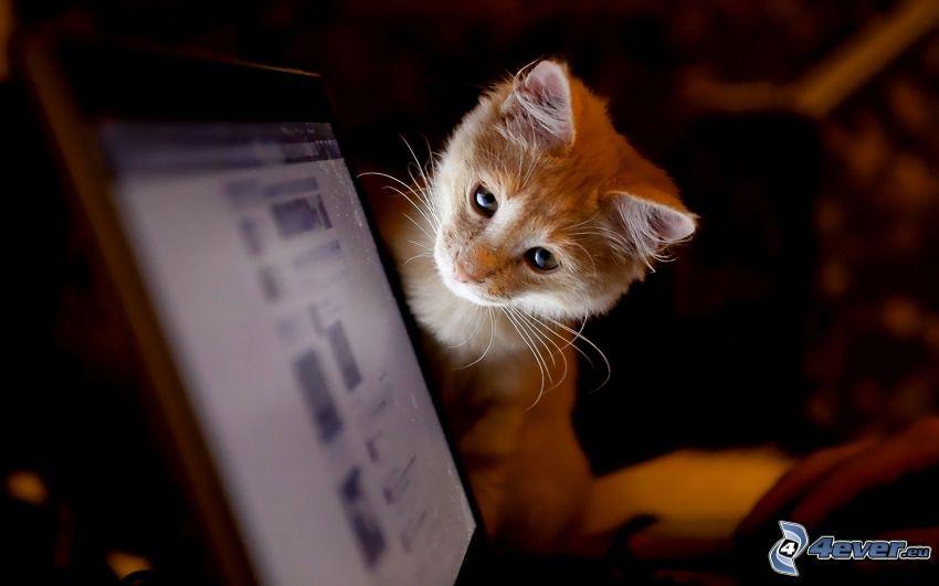 gattino, computer