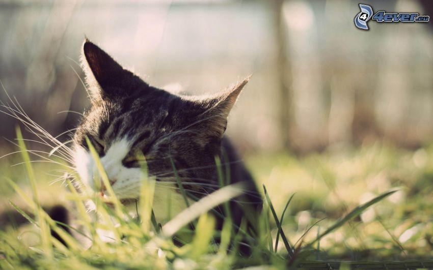 gattino, gatto nell'erba