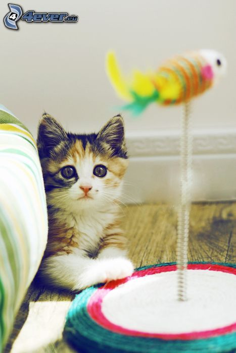 gattino, giocattolo