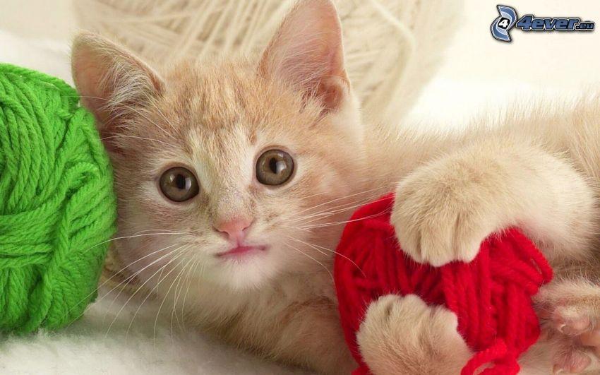 gattino, gomitoli, lana