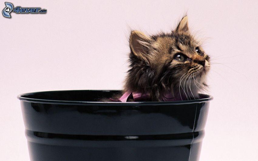 gattino, secchio