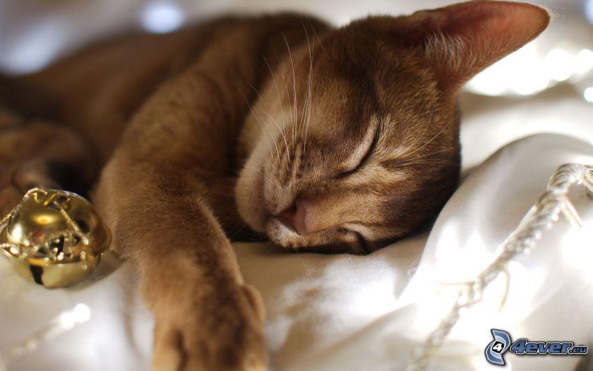 gattino addormentato, gatto marrone, bell di tintinnio