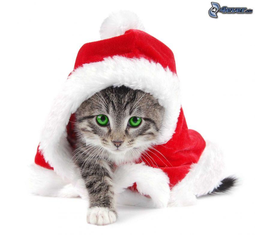 gattino grigio, cappello di babbo natale
