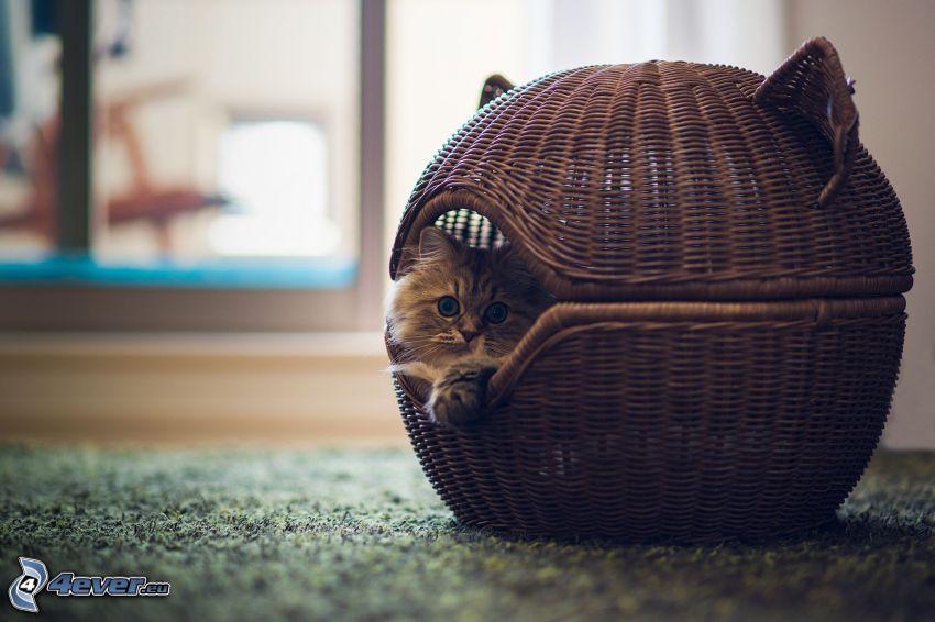 gattino in cesto