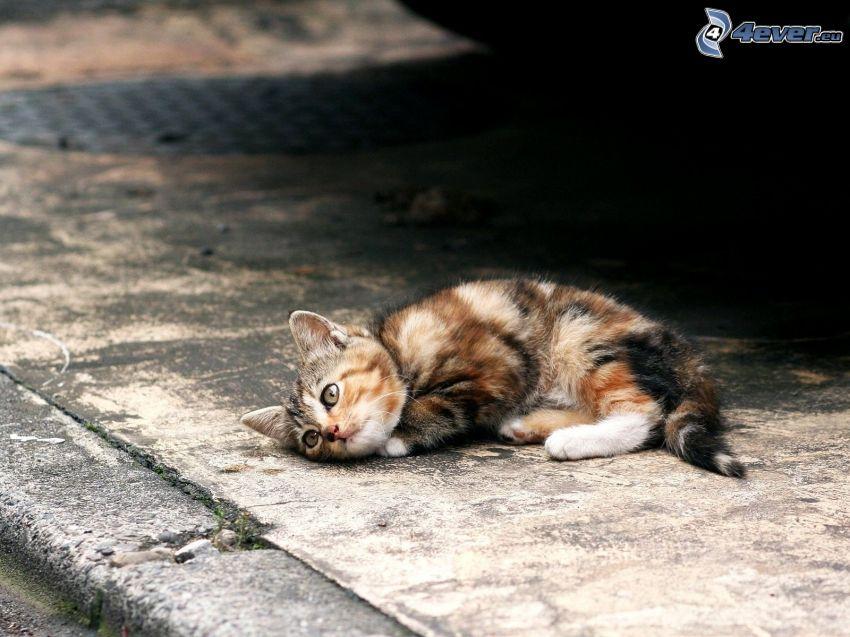 gattino macchiato, marciapiede