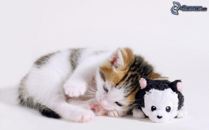gattino macchiato, peluche