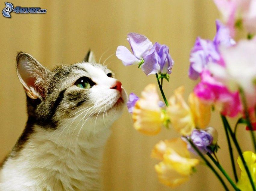 gatto, fiori colorati